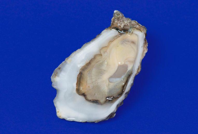 Ierse oester. Beeld Annabel Miedema met dank aan Brut de Mer