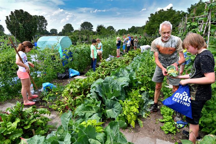 Bert Janssen helpt kinderen met het oogsten in de Molenhoekse moestuin.