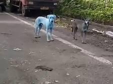 Blauwe honden gespot in Mumbai