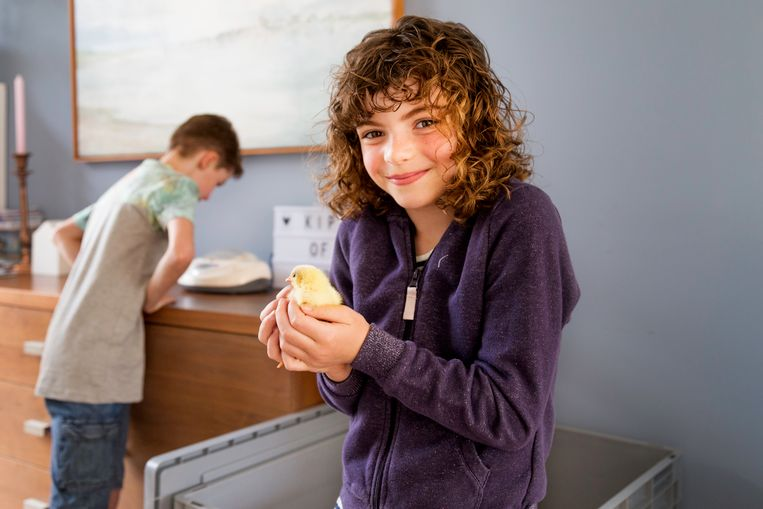 Lois houdt een pasgeboren kuiken vast terwijl Tijmen naar het andere kuiken kijkt in de broedmachine.   Beeld Pauline Niks