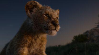 Bioscoopavondje aan het Hallehof: live-actionfilm The Lion King wordt vertoond op groot scherm