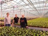 Deze plantenkwekers wisselden tomaten in voor pot- en perkplanten