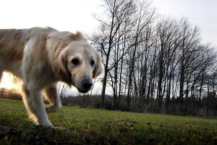 De hondenbelasting komt misschien terug in West Betuwe. Foto ter illustratie.