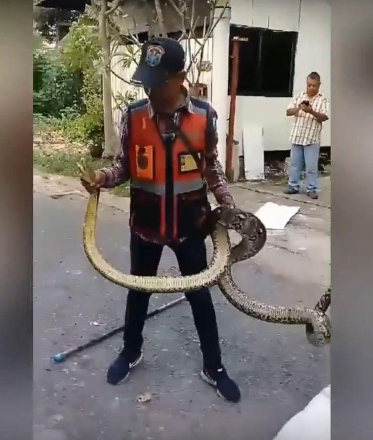 De python werd kort na het voorval weer vrijgelaten in de natuur.