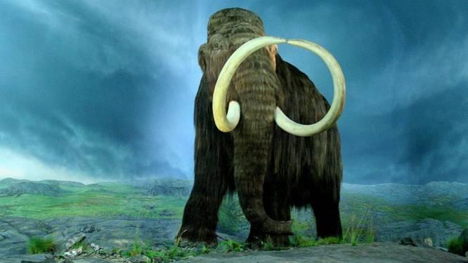 Lopen er binnenkort weer mammoeten rond op aarde?
