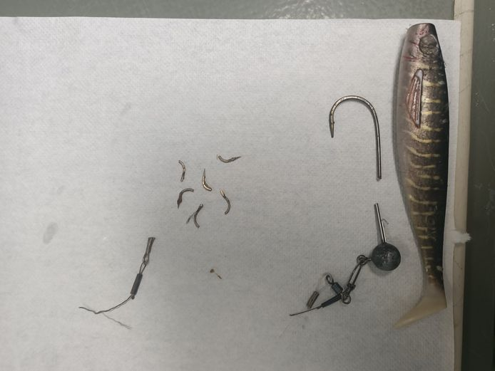 Reiger bevrijd van vishaken en draden.