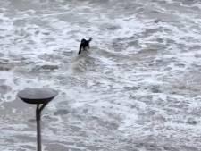 Vloedgolf verrast tiener op strand Vlissingen, vrienden in een deuk