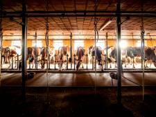 Zorgen over vernielingen bij melkveehouders in Drenthe en Groningen