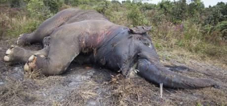 36 dode olifanten gevonden in Botswana, mogelijk vergiftigd