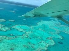 Un récif corallien plus grand que l'Empire State Building découvert dans la Grande Barrière de corail