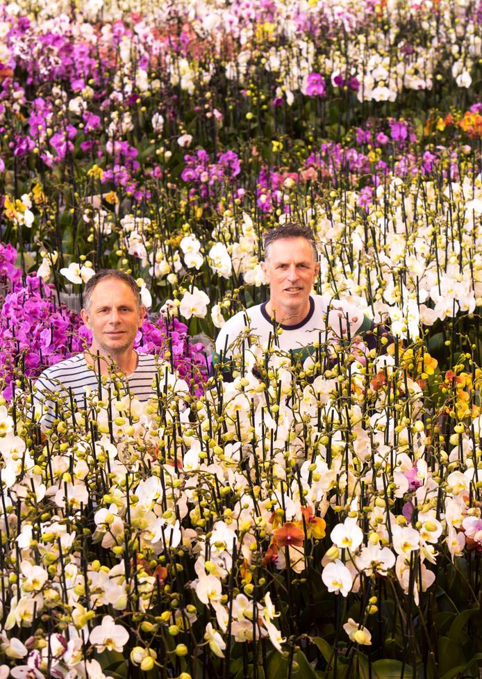 De directeuren Richard (links) en Eduard ter Laak van Ter Laak Orchids.