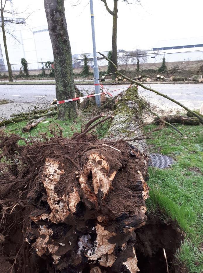 Deze boom viel op het meisje in Doetinchem.