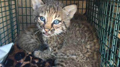 Familie denkt enkele kittens gevonden te hebben. Wanneer gezin diertjes wil voederen, escaleert de situatie