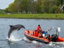 Utrechts stel helpt dolfijn Zafar uit Amsterdamse haven te redden: 'Het was ongelofelijk'
