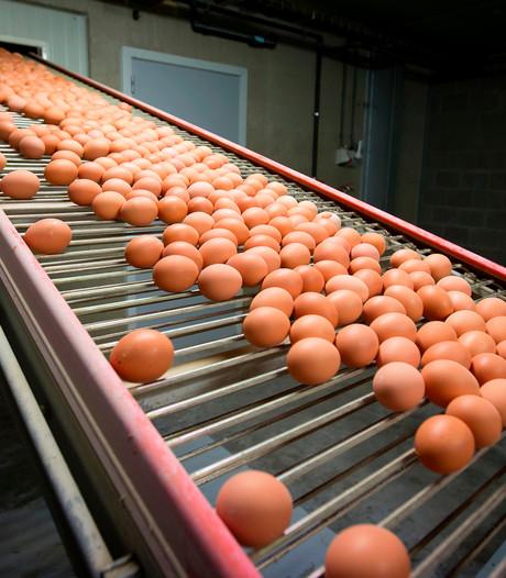 Geen fipronil bij kippenbedrijven in Brabant