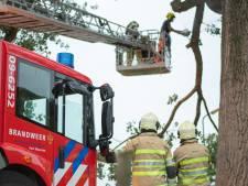 Grote tak breekt af op Breeveld in Woerden