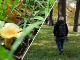 Zeldzame paddenstoel gevonden, gewoon in Zwols stadspark