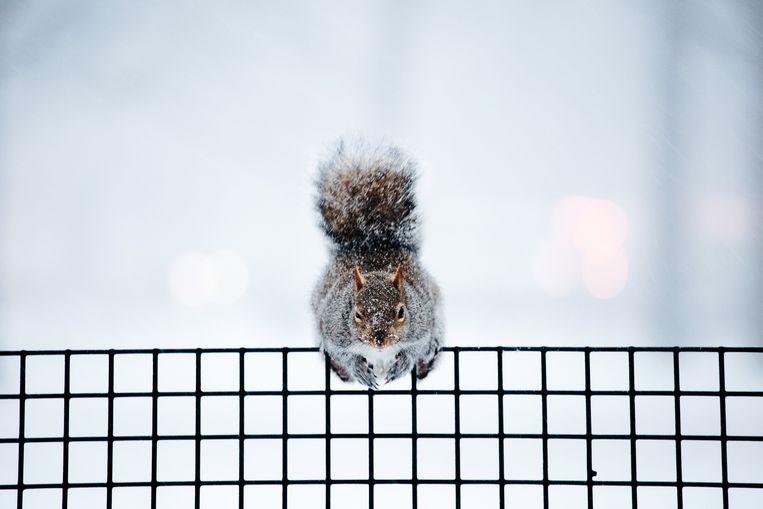 Zelfs de eekhoorns hebben  het moeilijk.