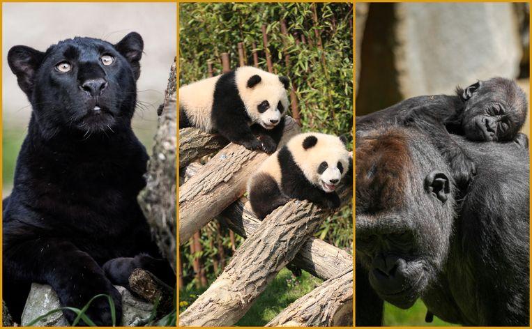 Veel baby's en nieuwe dieren te zien in Belgiës grootste dierentuinen.