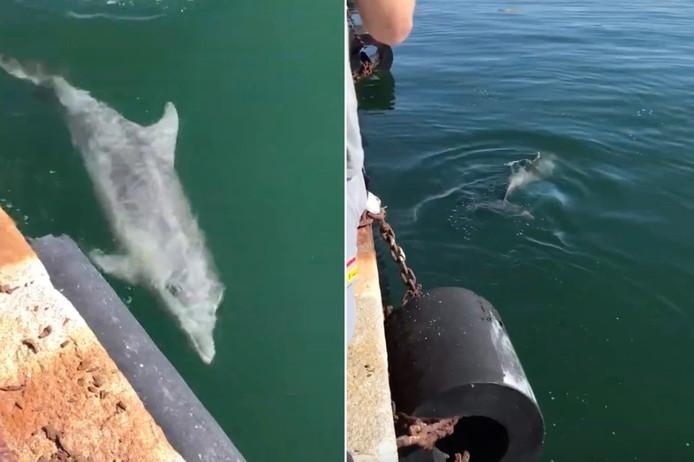 Des dauphins aperçus à Cagliari, en Italie.