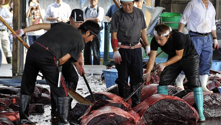 Japanse vissers snijden een walvis in stukken. Beeld epa
