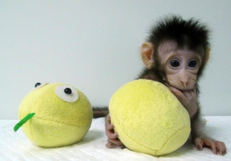 Hua Hua vindt het allemaal nog spannend Beeld ap
