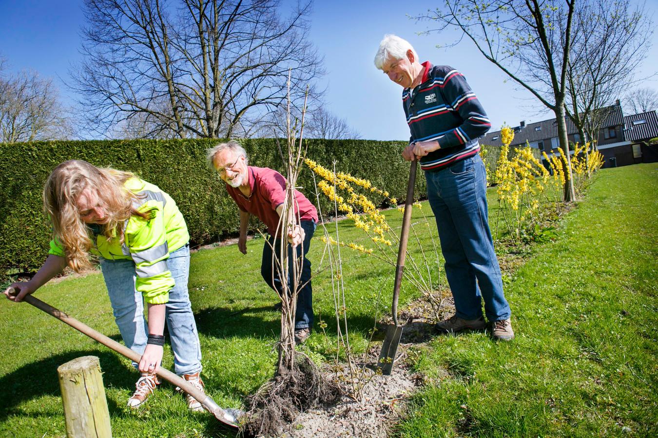 Foto ter illustratie.   bosschage rond de Oude Begraafplaats in Nieuw-Beijerland - poten van bomen en struiken door o.a. Wim Beerends (R) - Martijn Verweijen (M) en Nelleke van Buren (L)