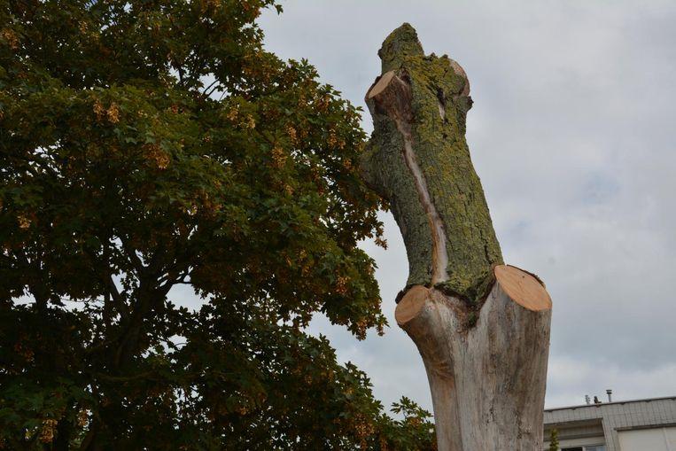 De groendienst heeft deze dode boom alleen maar wat gesnoeid, maar laat hem verder ongemoeid.