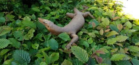 Dierenambulance Hoorn rukt uit voor enorme 'roerloze' varaan in de bosjes
