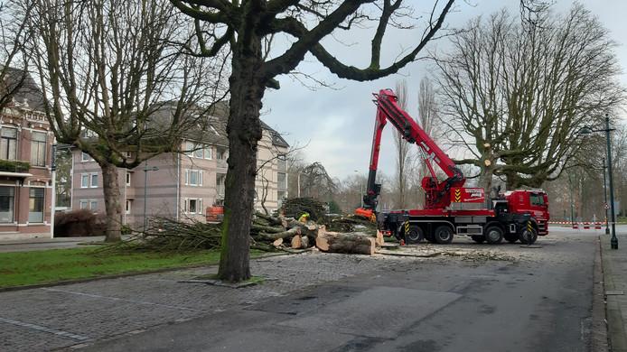 De bomenkap in de Parkstraat is begonnen.