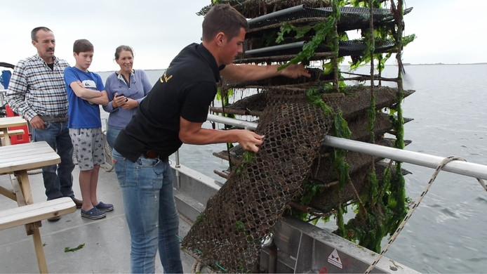 Jesse Nelis haalt de oesters binnen