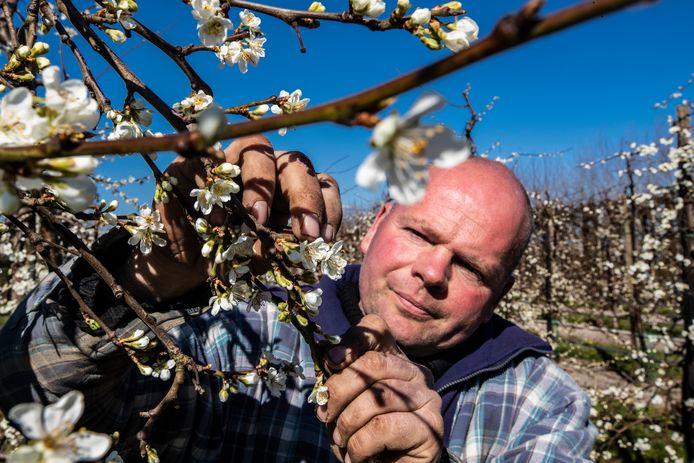 Evert van Vilsteren heeft een fruitbedrijf in Wijhe. ,,We weten pas over ruim een maand, dus ergens in mei, wat de exacte gevolgen zijn van de vorst.''