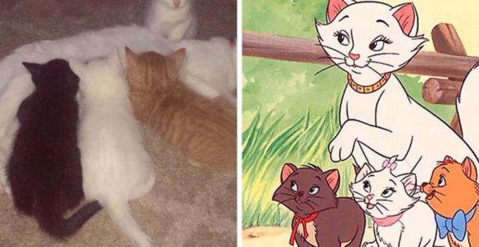 Aristocats in't echt?