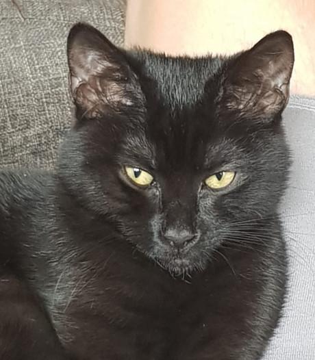 Dode katten in Nunspeet werk van dierenbeul?