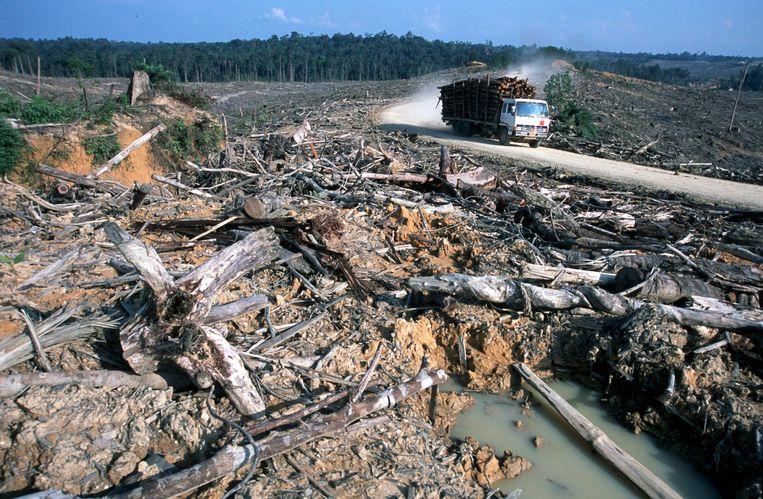 Ontbossing in Sumatra, Indonesië. Beeld anp