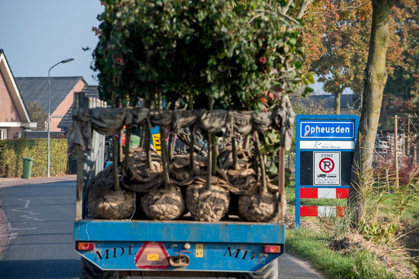 Laanbomen in Opheusden