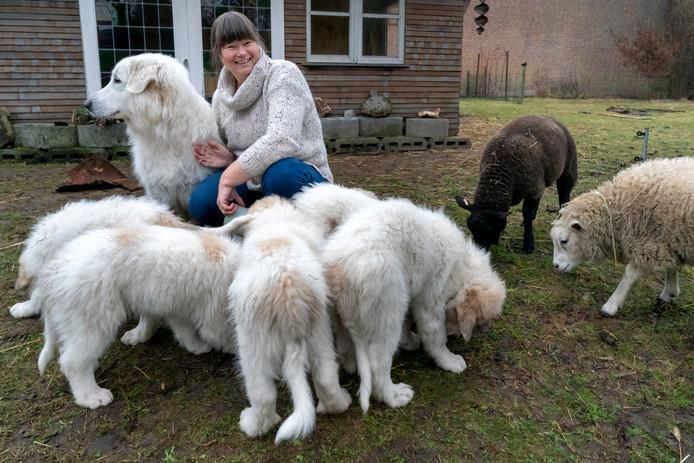 Nederland,  Den Dungen, universitair ecoloog  Lily Vercruijsse met haar pyreneese berghonden .