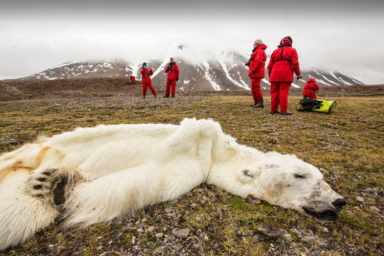 Deze ijsbeer stierf een pijnlijke hongerdood. Zijn zoektocht naar ijs om op voedsel te jagen werd hem fataal. De fjorden in het Noorse Svalbard bevriezen niet meer.