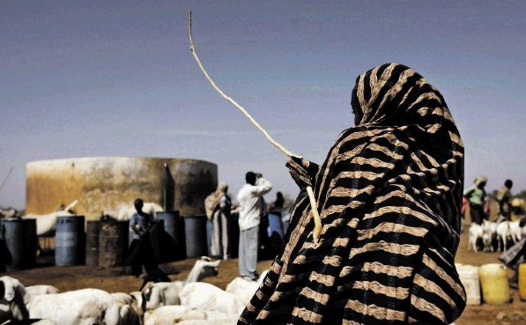 Een herder leidt haar schapen naar een van de schaarse bronnen in Wargadud. (FOTO EPA) Beeld EPA
