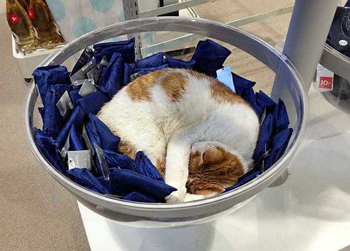 Charlie, de huiskat van winkelcentrum Koningshoek in Maassluis.