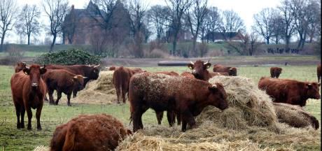 Loevestein-runderen met dioxine: wat als ik er al mee heb gebarbecued?
