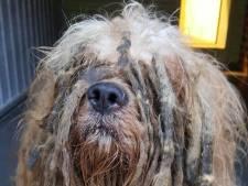 Dierenpolitie treft zwaar verwaarloosde hond aan: 'hij is er slecht aan toe'