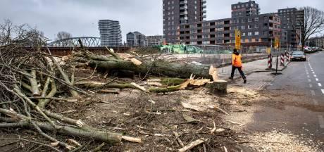 Ben je als boom nog wel veilig in Nijmegen?