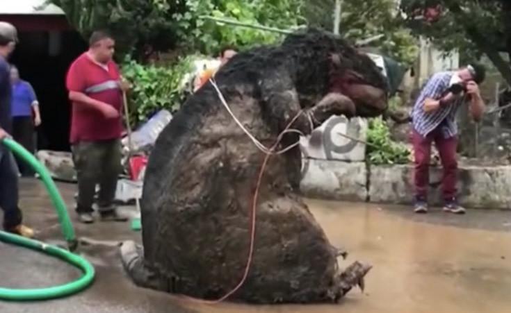 Deze gigantische rat veroorzaakte een verstopping, waardoor de buurt overstroomde.