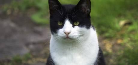 Oproep: Overlast van katten