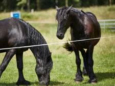 Arrestatie in lugubere paardenzaak Frankrijk