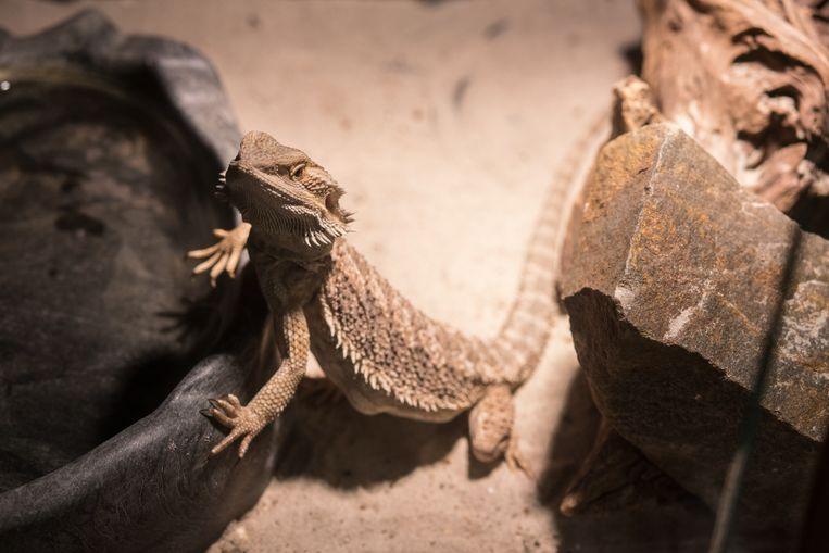 Er zijn 11.500 verschillende reptielsoorten.