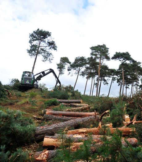 Herstel de natuur: met het kappen van bomen?