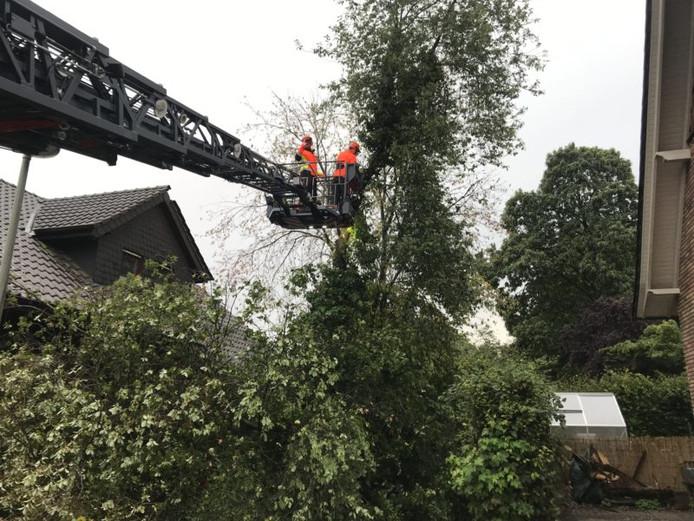 Brandweerhulpverleners toppen de door bliksem getroffen boom aan de Braoke stuk voor stuk af.