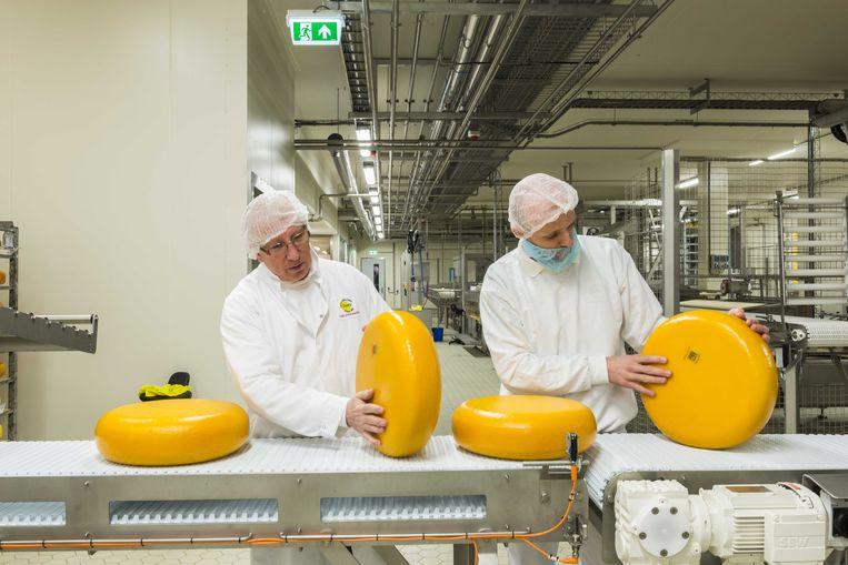 Controle van kazen in de fabriek van Cono, maker van de polderkaas 'Beemster'.  Beeld ANP XTRA